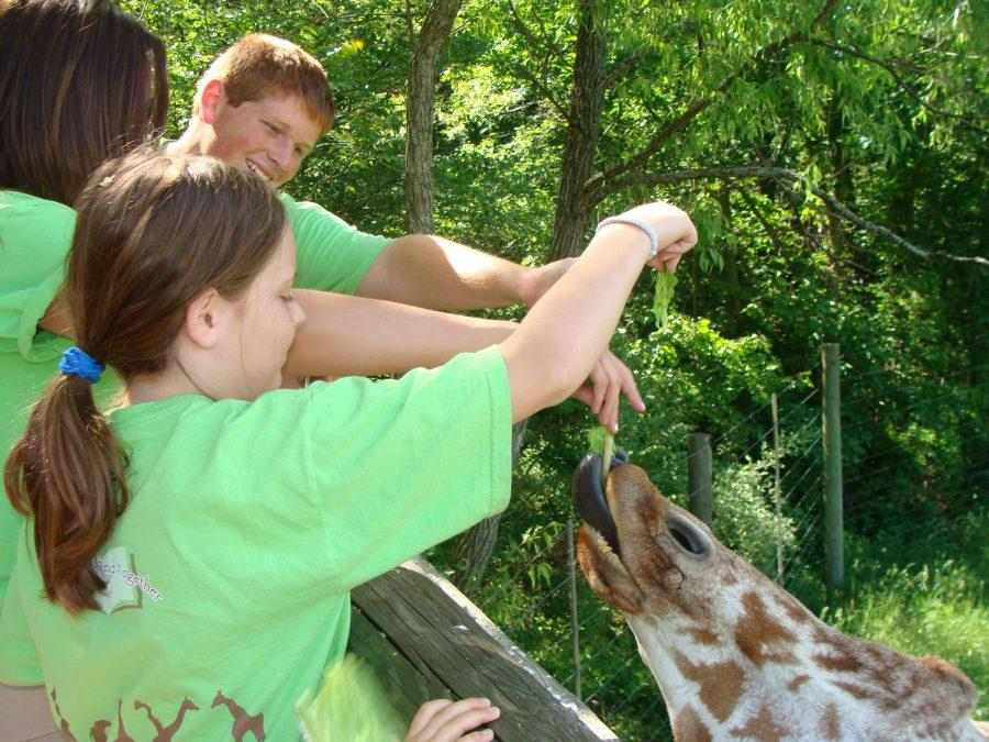 Drew Dunham feeds the giraffes with his Edison book buddy. The Edison students get to interact with animals they have learned about with their book buddy.