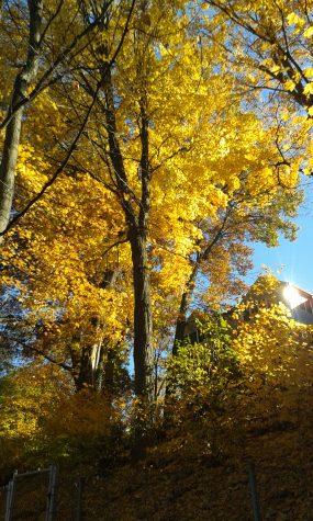 Fall Events in Kalamazoo