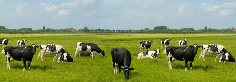 Cowspiracy: Helping the Environment and our Diets