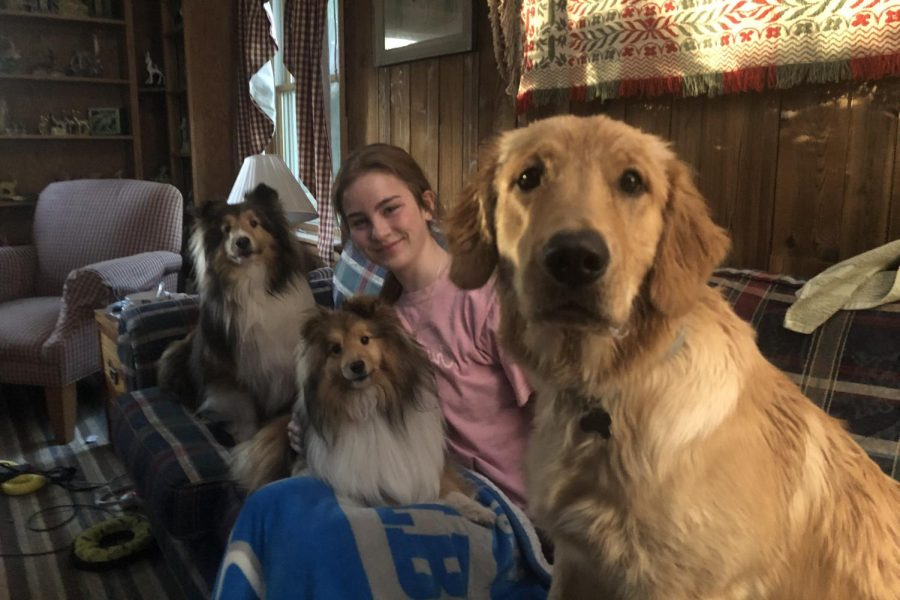 Junior Elizabeth McFarlen enjoys favorite childhood movie Cars alongside her dogs Henry, Milo and Cruz (left to right). Many students have been returning to nostalgic pieces of media amidst the pandemic.